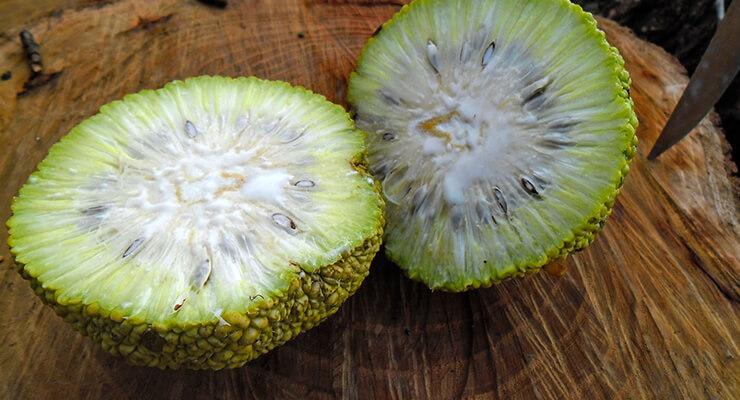 Адамово яблоко- рецепт настойки для суставов, рецепт мази