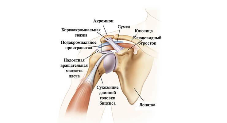 Изображение - Болезни суставов плеча симптомы лечение bol-v-plechevom-sustave1